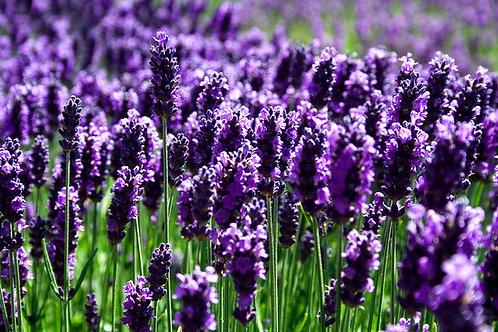 Lavender Wax Melt