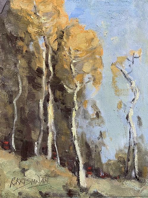 Golden Aspens | 8x6, Oil on Canvas
