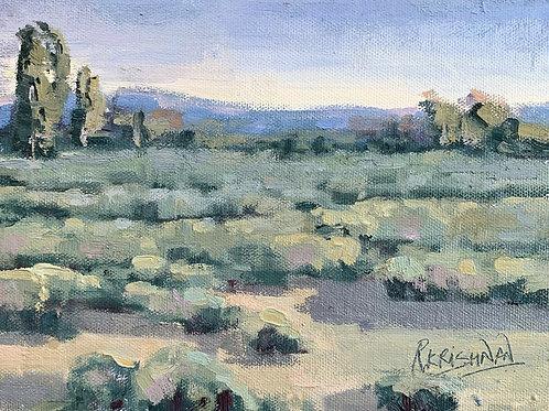 Sage Fields   6x8, Oil on Canvas