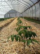 Dog River Farm Greenhouse