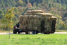 Dog River Farm Hay