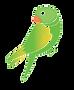 Transparent Parrot