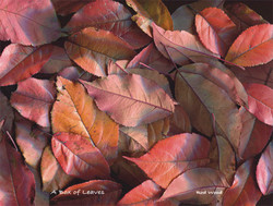 Box Leaves