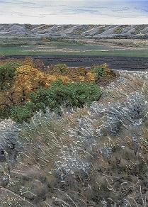 Sage Hillside