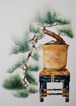 Cascading Bonsai