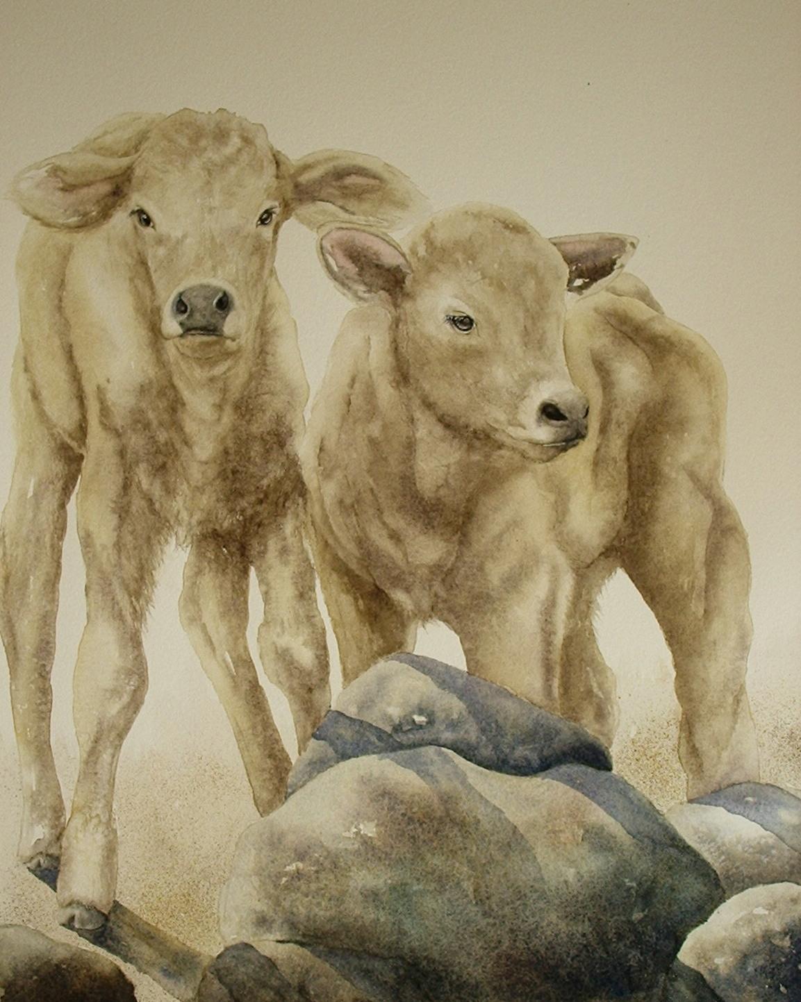 Rhonda's Prize Calves