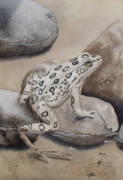 Leopard Frog and Friends