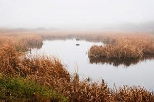 Prairie Marsh
