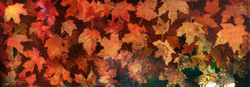 Autumn Leaves in Water II