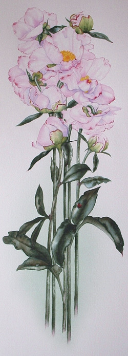 Peonies for Evelyn