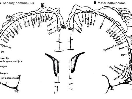¿Cómo procesa el cerebro la actividad motora?