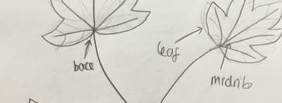Redraft biological diagram 5.JPG