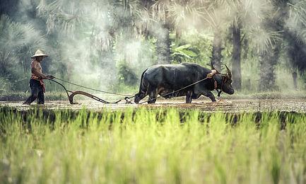 buffalo-1822574_1280.jpg