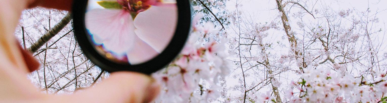 flower_meditation.jpg