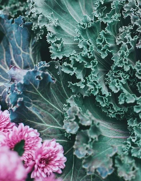 green%20and%20purple%20leafed-plant_edited.jpg