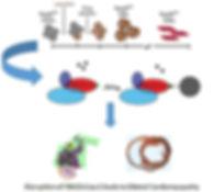 Graphi_abstract_PLOS_GENETICSsm-pub-page