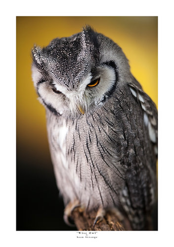 'Wise Owl'