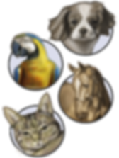 PET_PORTRAITS.png