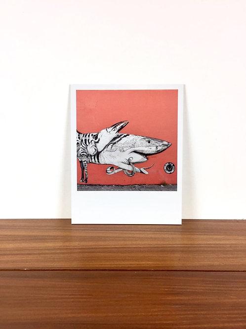 IMPRESSION SUR DIBOND: SHARK (20cm x 25cm)