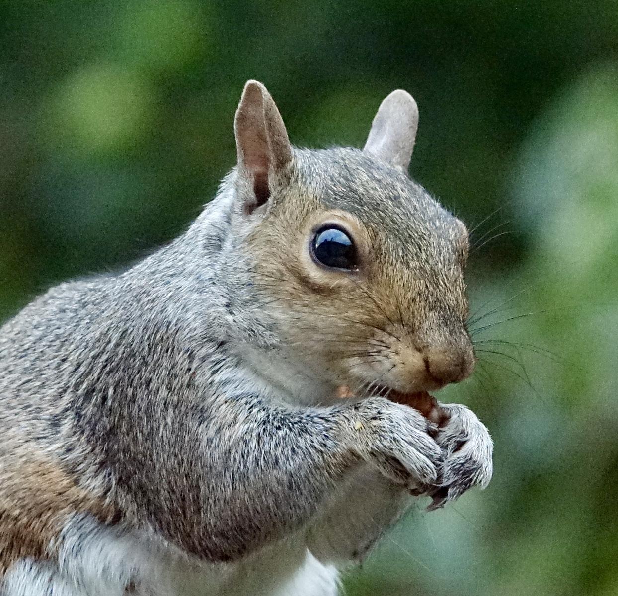 7. the nut thief.angela farnsworth