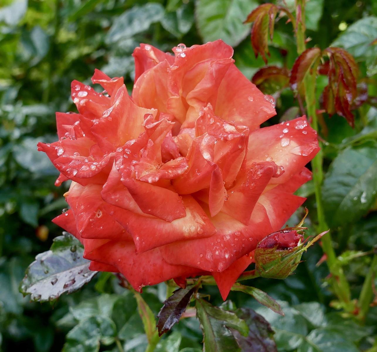 3. after the rain.angela farnsworth