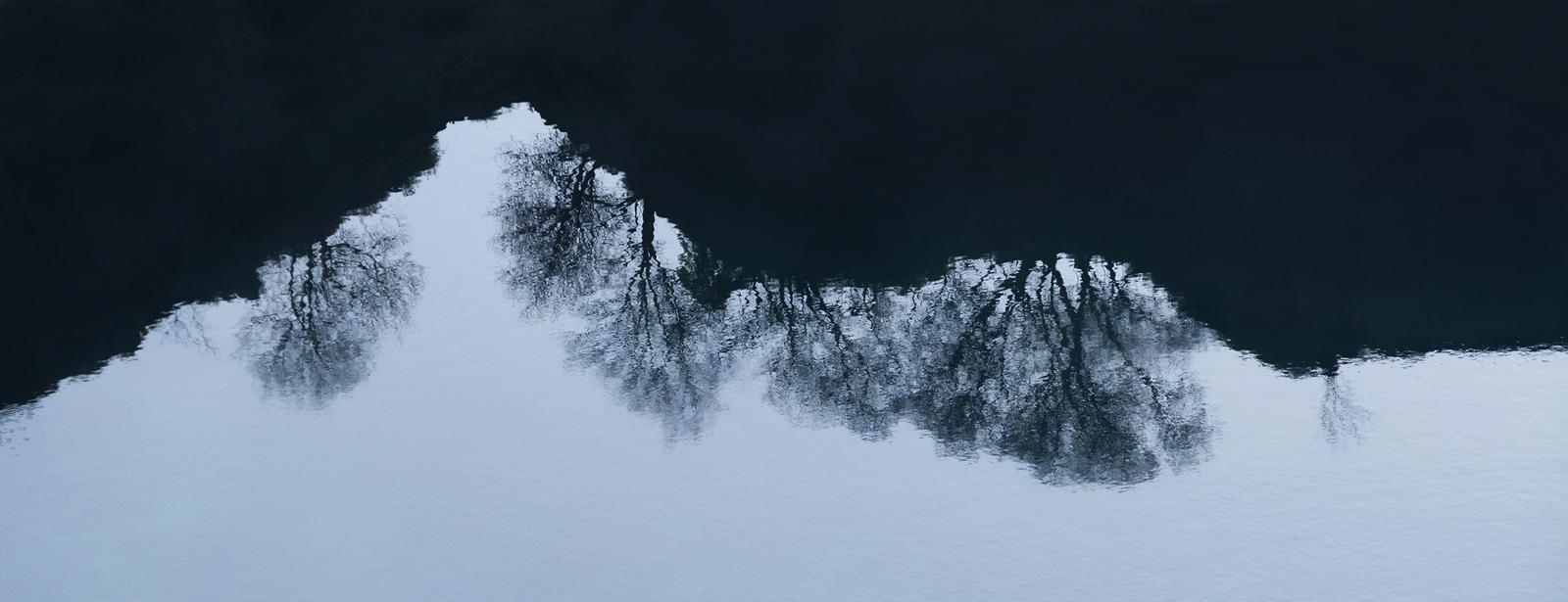 2. tree reflections.sue hogarth
