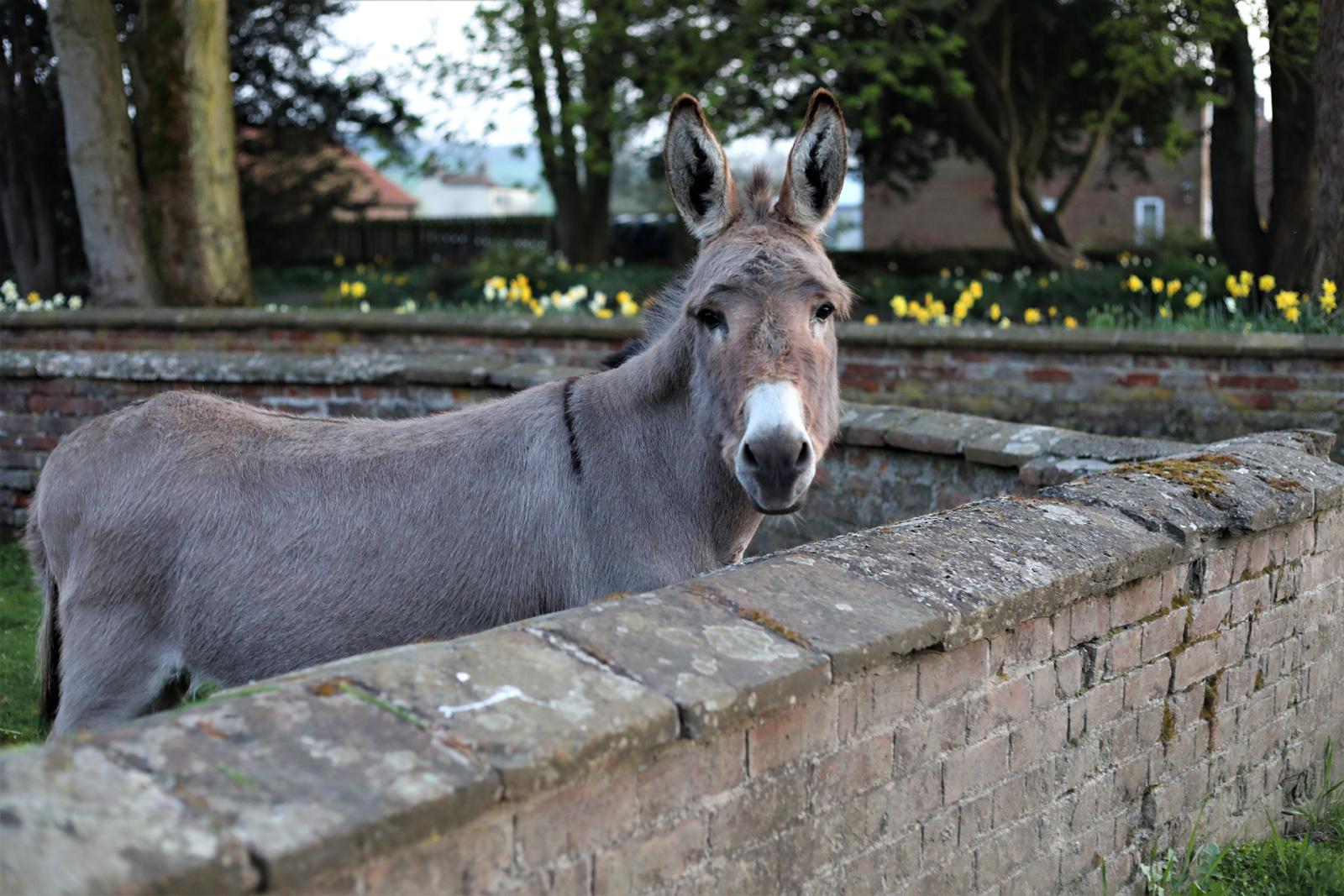 5. donkey friend.will smith