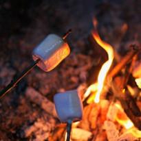 Fire Side Nights