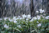 raindrops-plants-smell.jpg.653x0_q80_cro