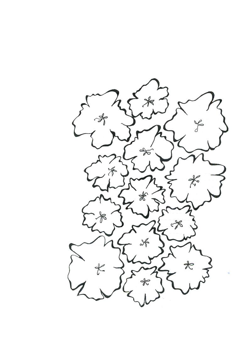 Eva Napier hand drawing.jpg