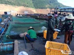 幾千萬斤緊急上市,廣西養殖戶賣魚難