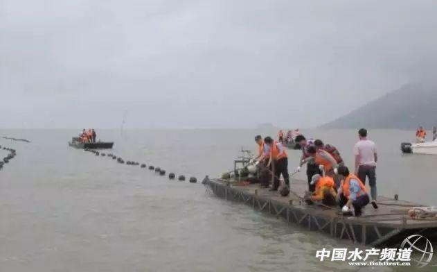 台山清理養蚝,整治8萬畝無證養殖海區
