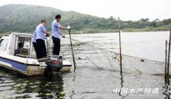 太湖清理大閘蟹