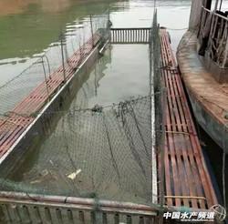 全國江河湖泊水庫取締網箱養魚
