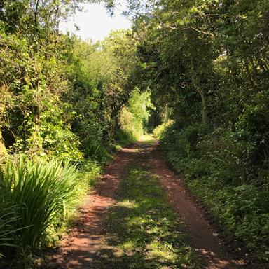 Ancient Lane leading to Scott's Cottage