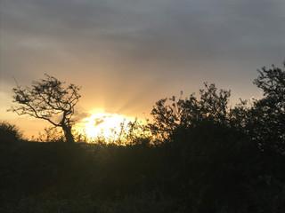 Morning sun at Hope Farm