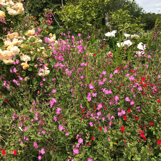 Flowers at Hope Farm