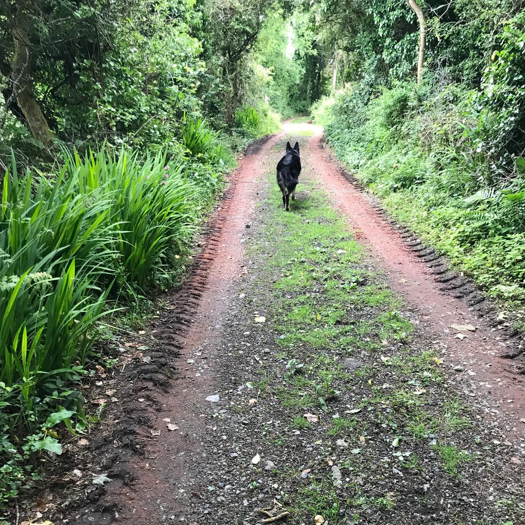Ancient lane to Scott's Cottage