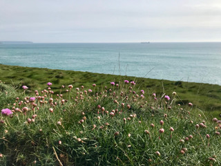 Wildflowers and sea at Porthleven