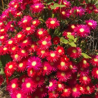 Beautiful flowers at Hope Farm
