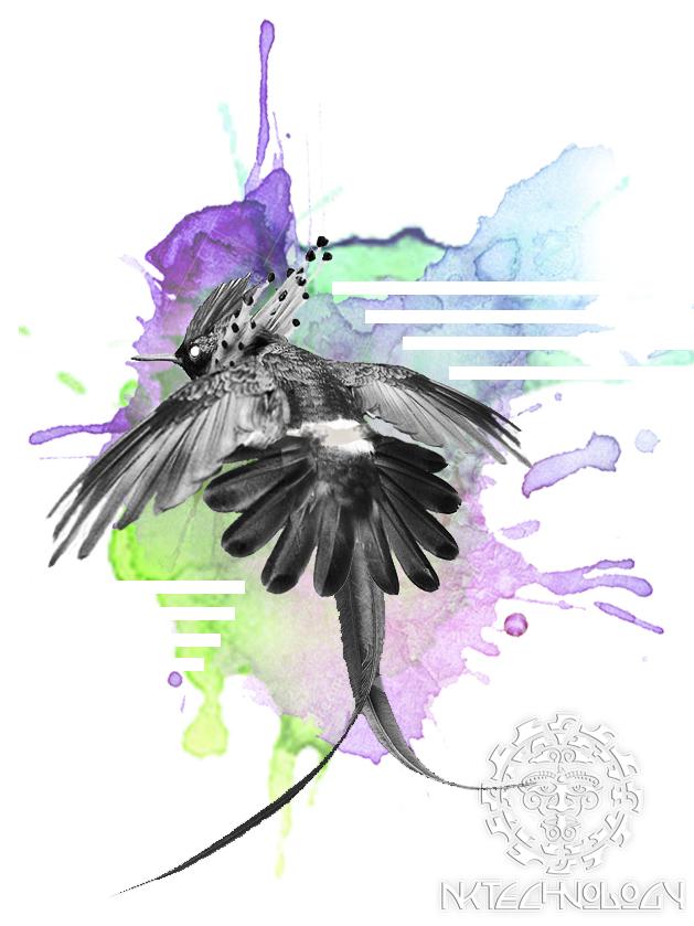 колибри-эльф-фото-3