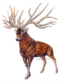 Bush-antlered deer