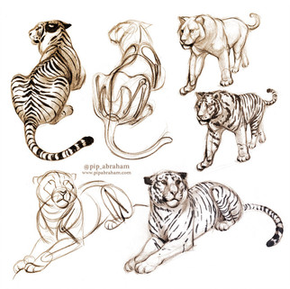 Tiger construction studies
