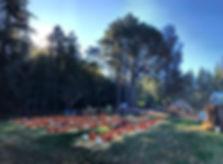 Morning views of the pumpkin patch! #dra