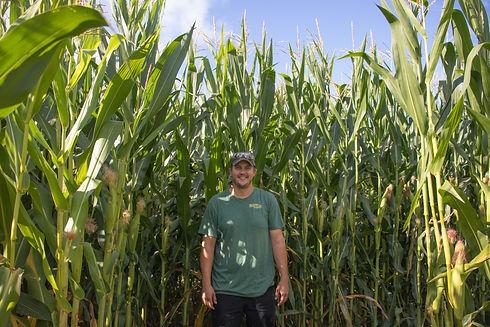 wes  75 inches corn maze.jpg
