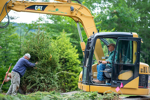 Eastern Green Landscape Construction