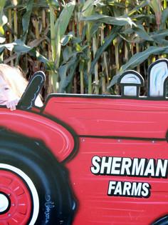 Sherman Farm Corn Maize