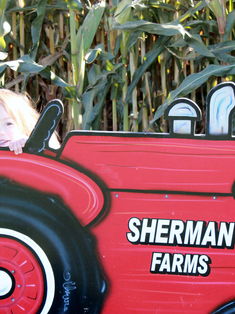 Sherman Farm Corn Maize