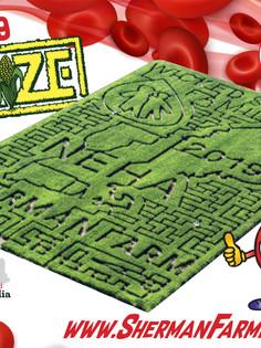 2019 Maze banner large.jpg