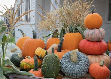 pumpkin_wagon_specialty_cropped_570x370.jpg